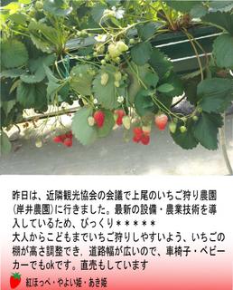 kishiiichigo.jpg
